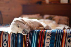 legowisko dla psa online